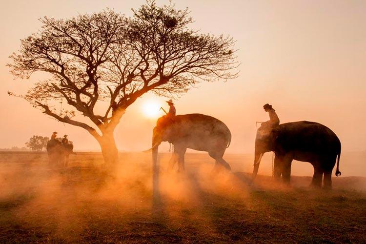 слоны на рассвете