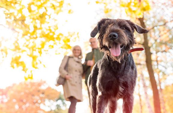 собака, прогулка с собакой, выгул собаки, парк собака