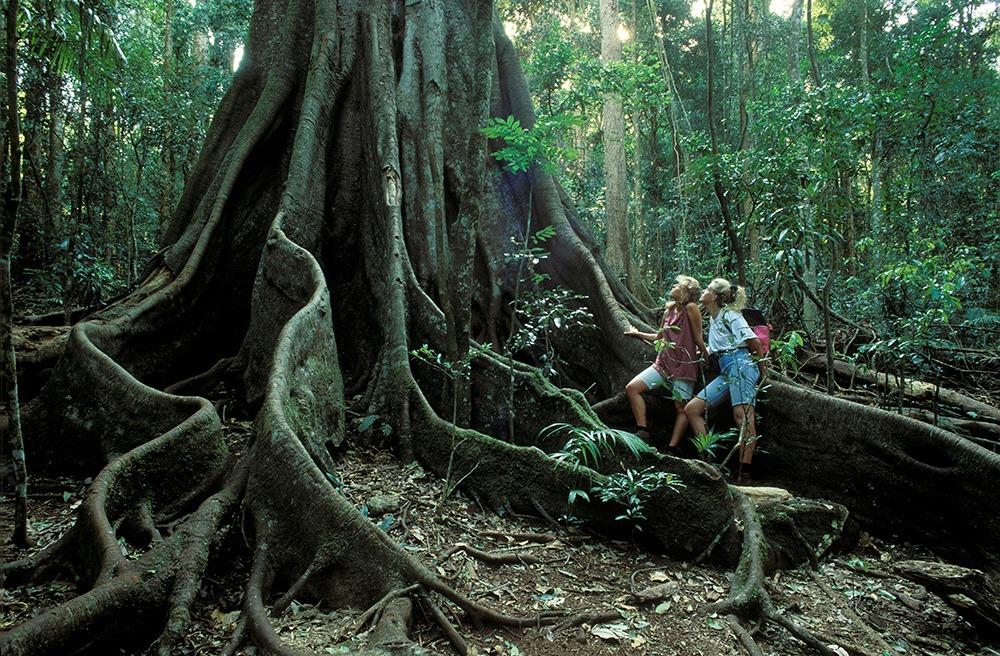 Дождливый лес Дейнтри