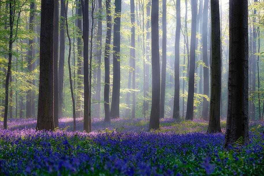 халлербос синий голубой лес