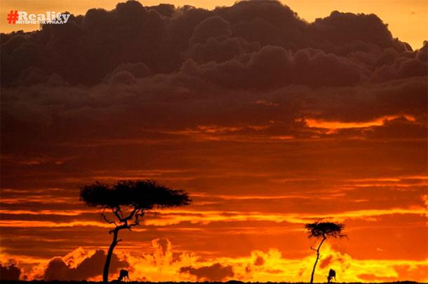 Галерея закатов в Кении. Пол Гольдштейн
