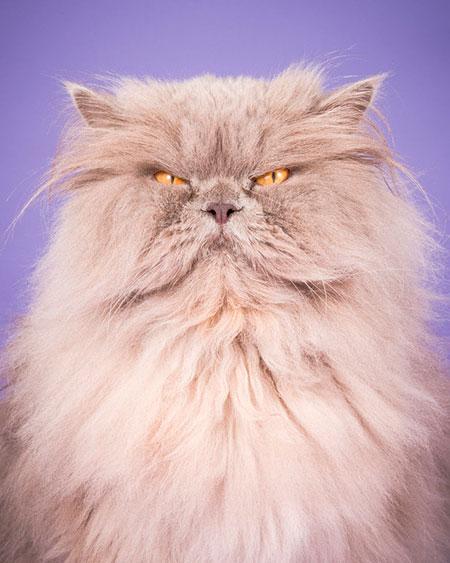 Пит Торн Толстые кошки коты толстосумы