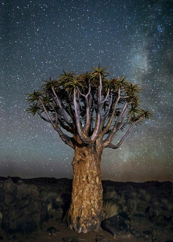 деревья и космос