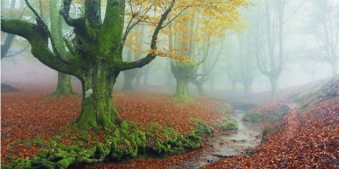 Сказочный лес отзаретта